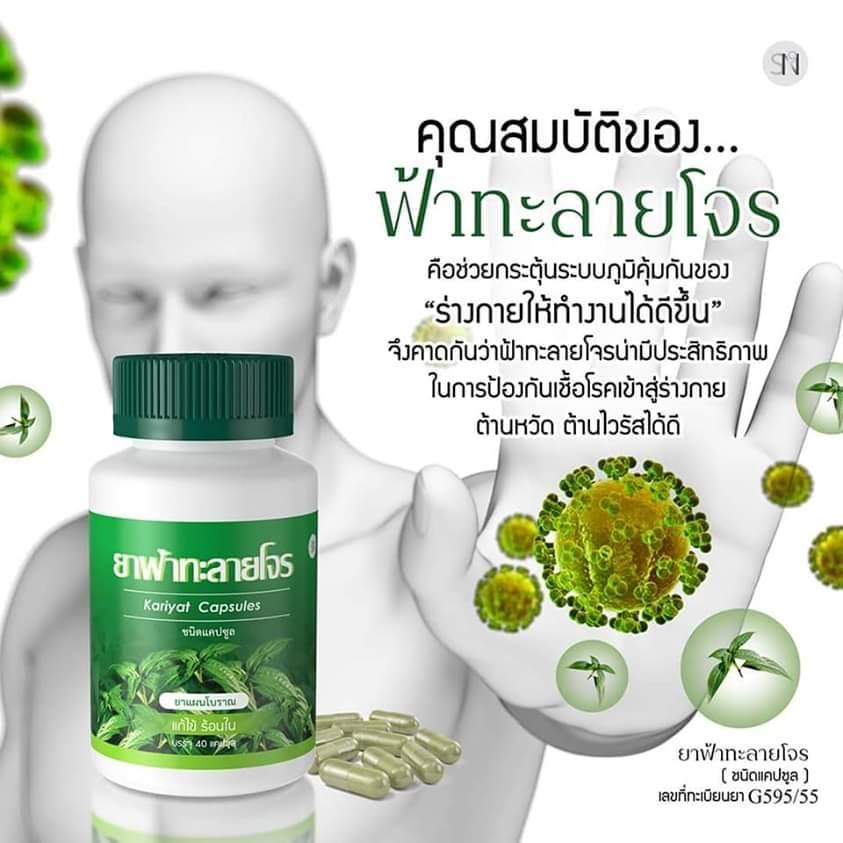 Kariyat Thai Herb Graines Organic ฟ าทะลายโจร 30 graines